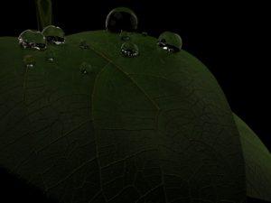 leaf tasarım